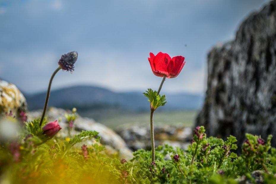 Endemic Plants and Flora of Turkey